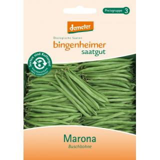 Buschbohnen Marona