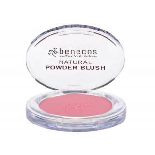 Compact Blush mallow rose